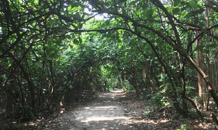 hiking-trails-in-singapore-chestnut-nature-park