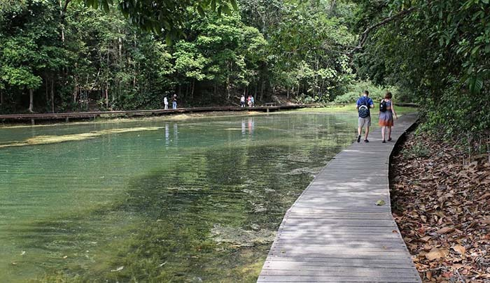 scenic-places-to-jog-macritchie-reservoir-park