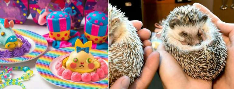 21 weirdest, cutest, coolest themed cafés in Tokyo you should not miss out on