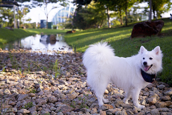pet-friendly-establishments-in-singapore-gardens-by-the-bay-2