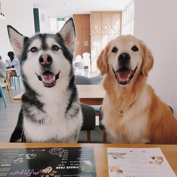 pet-friendly-establishments-in-singapore-menage-cafe