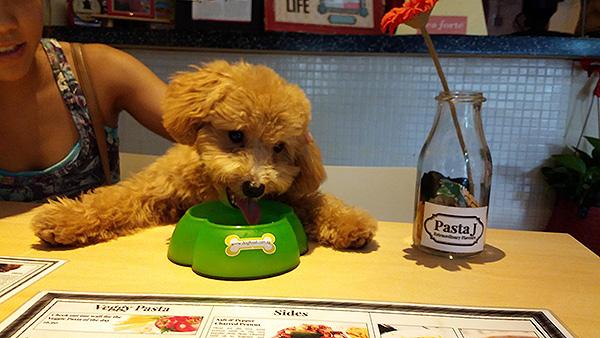 pet-friendly-establishments-in-singapore-pasta-J