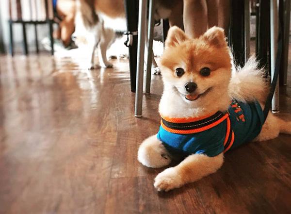 pet-friendly-establishments-in-singapore-sun-ray-cafe-2