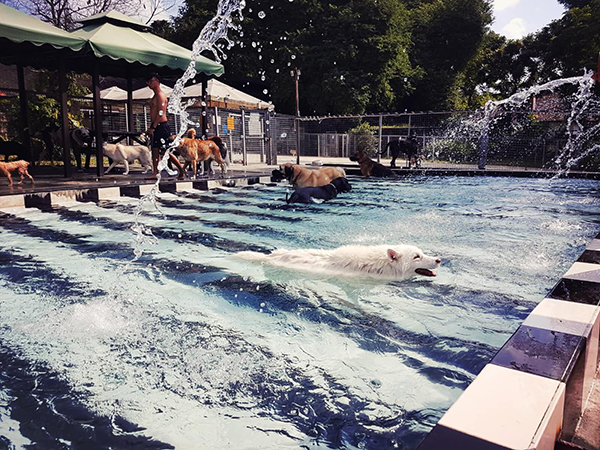 pet-friendly-establishments-in-singapore-sunny-heights