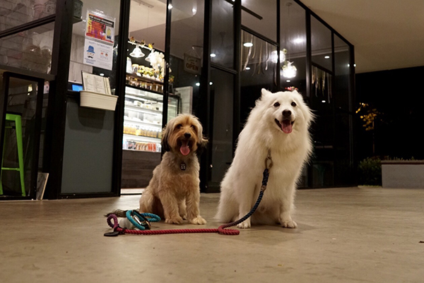 pet-friendly-establishments-in-singapore-verdure-cafe-2