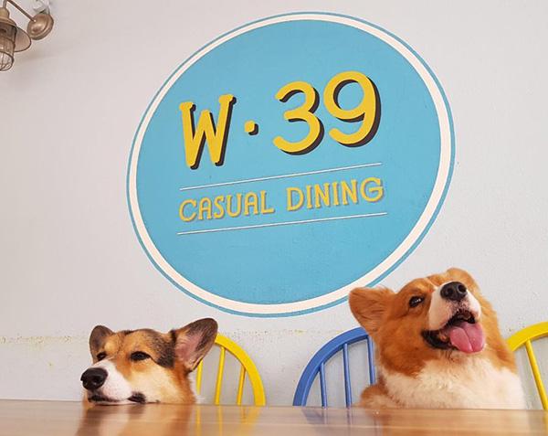 pet-friendly-establishments-in-singapore-w39-bistro-bakery