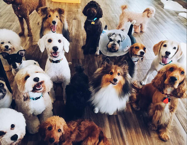 pet-friendly-establishments-in-singapore-wagging-rights-2