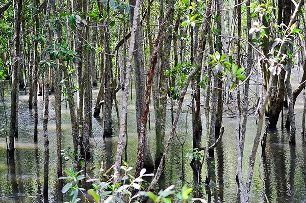 interesting-picnic-spots-singapore-sungei-buloh-wetland-reserve-2