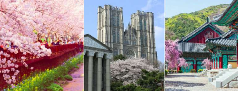 Cherry blossom viewing in Korea 2019: Here's everything you need to know