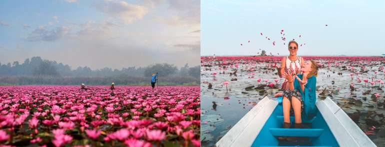 Thailand's Red Lotus Sea is your new bucket-list item – but there's a catch
