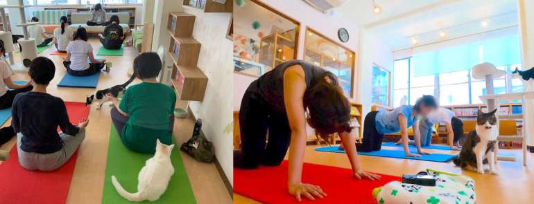 You can take a yoga class with adorable cats in Japan – find out where!