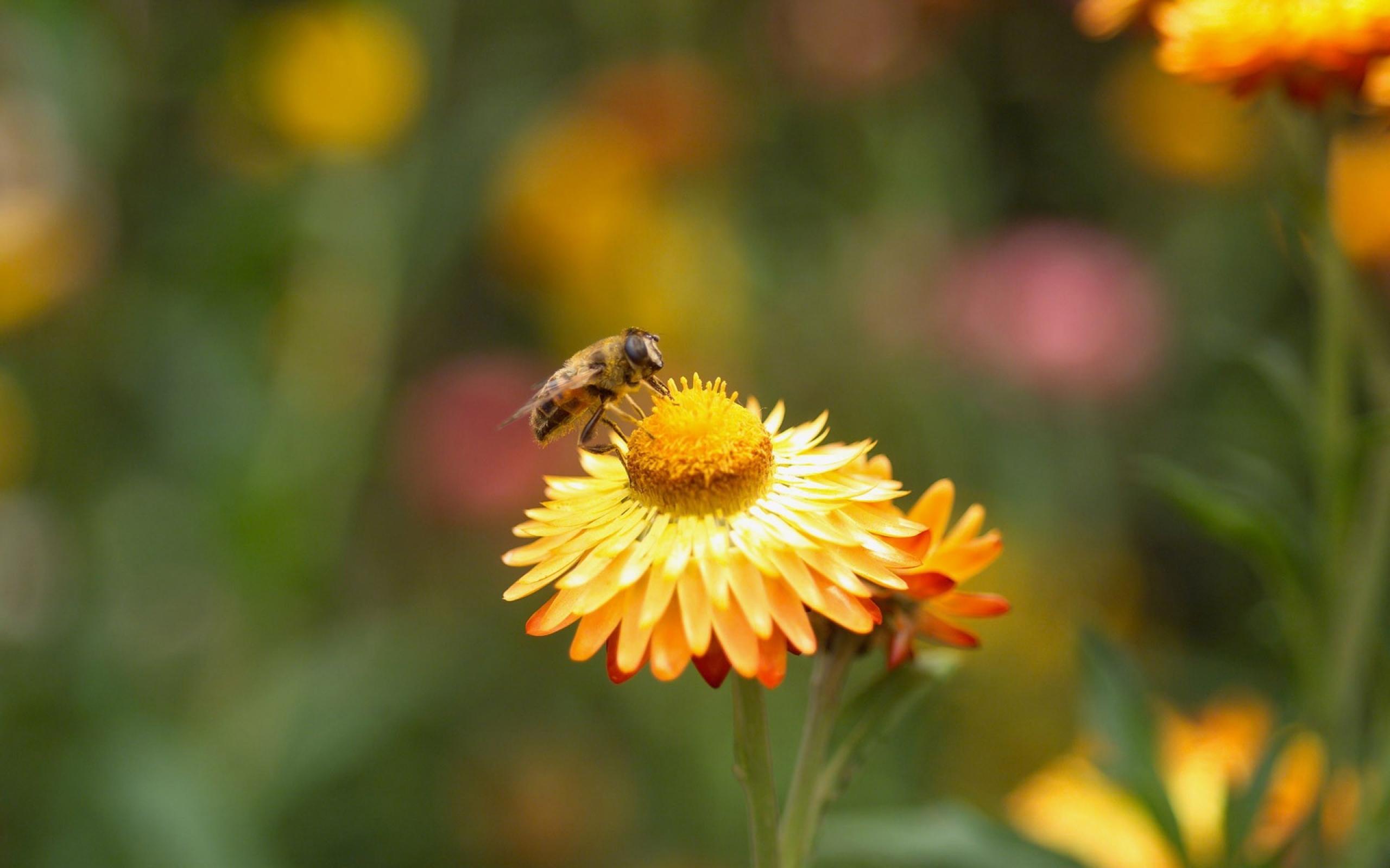 B1G1 Bee