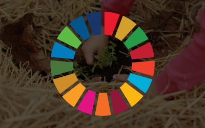 Top 11 ways your business can contribute to the SDGs