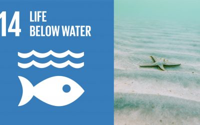 Life Below Water – A Confronting Truth
