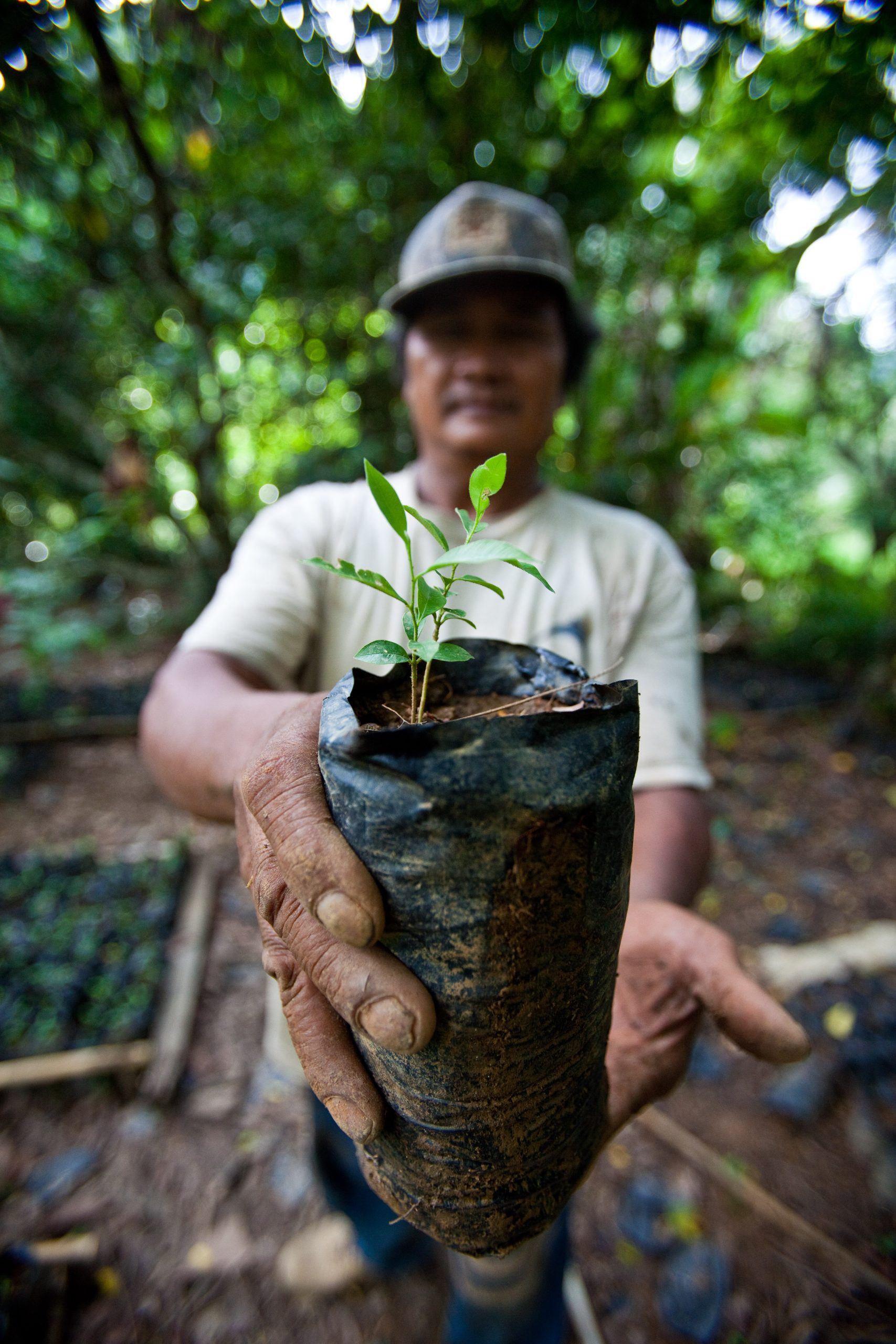 A seedling patients can use to pay for health care in Indonesia