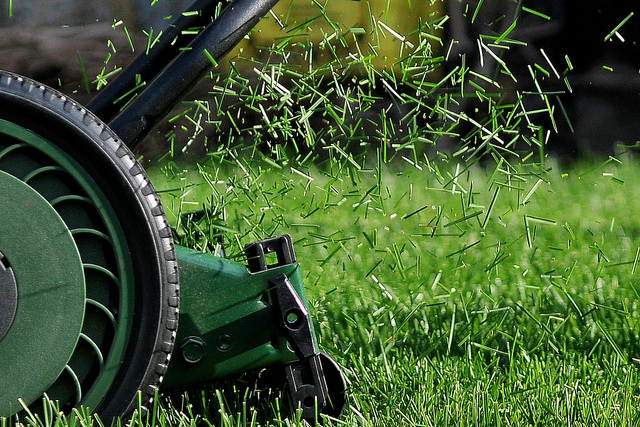 mowing the lawn/cutting grass