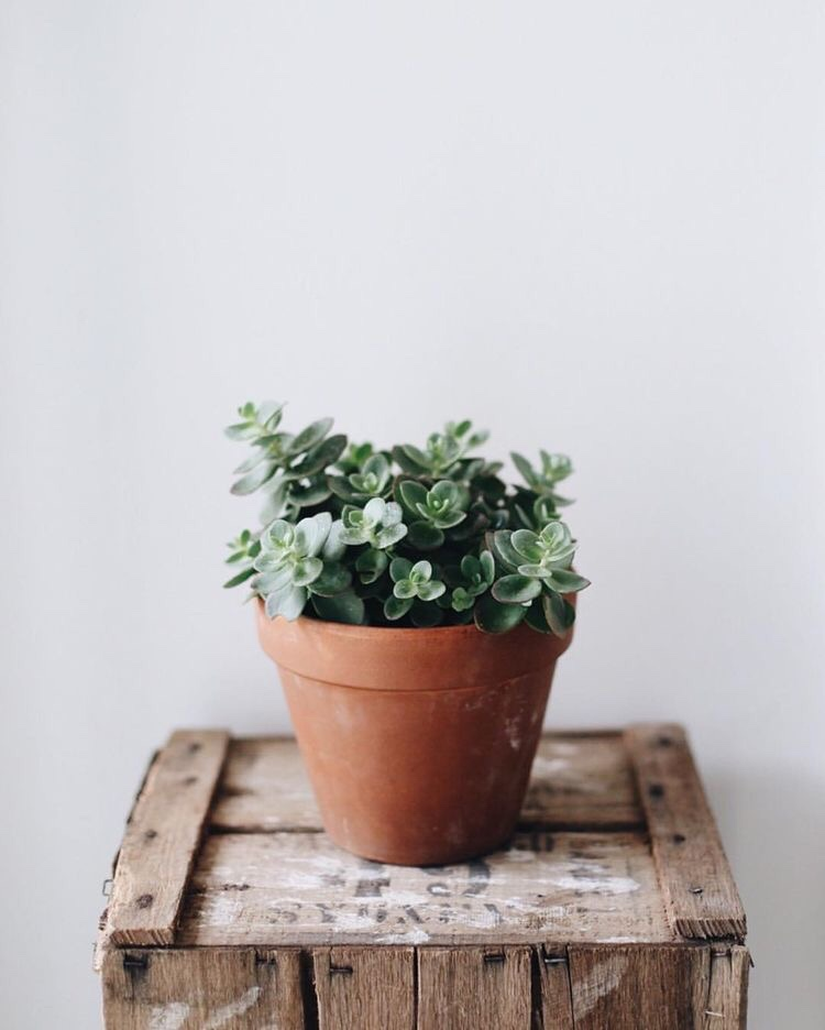 plant-indoor-tumblr
