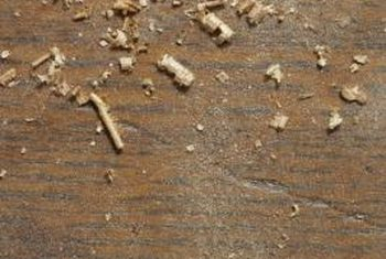 sawdust left by termite