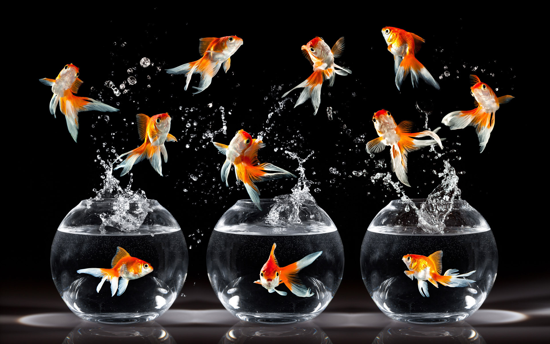 Beautiful and stunning goldfish pictures