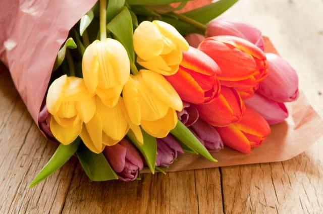 tulips in yellow, red, and purple