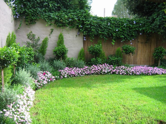 dwarf shrubs in home garden