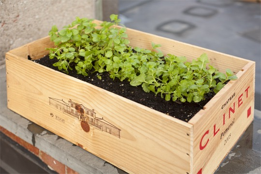 wine crate planting