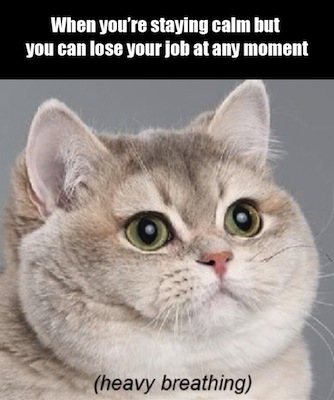 "Wide-eyed anxious cat. Caption on image, ""When you're staying calm but you can lose your job at any moment."""