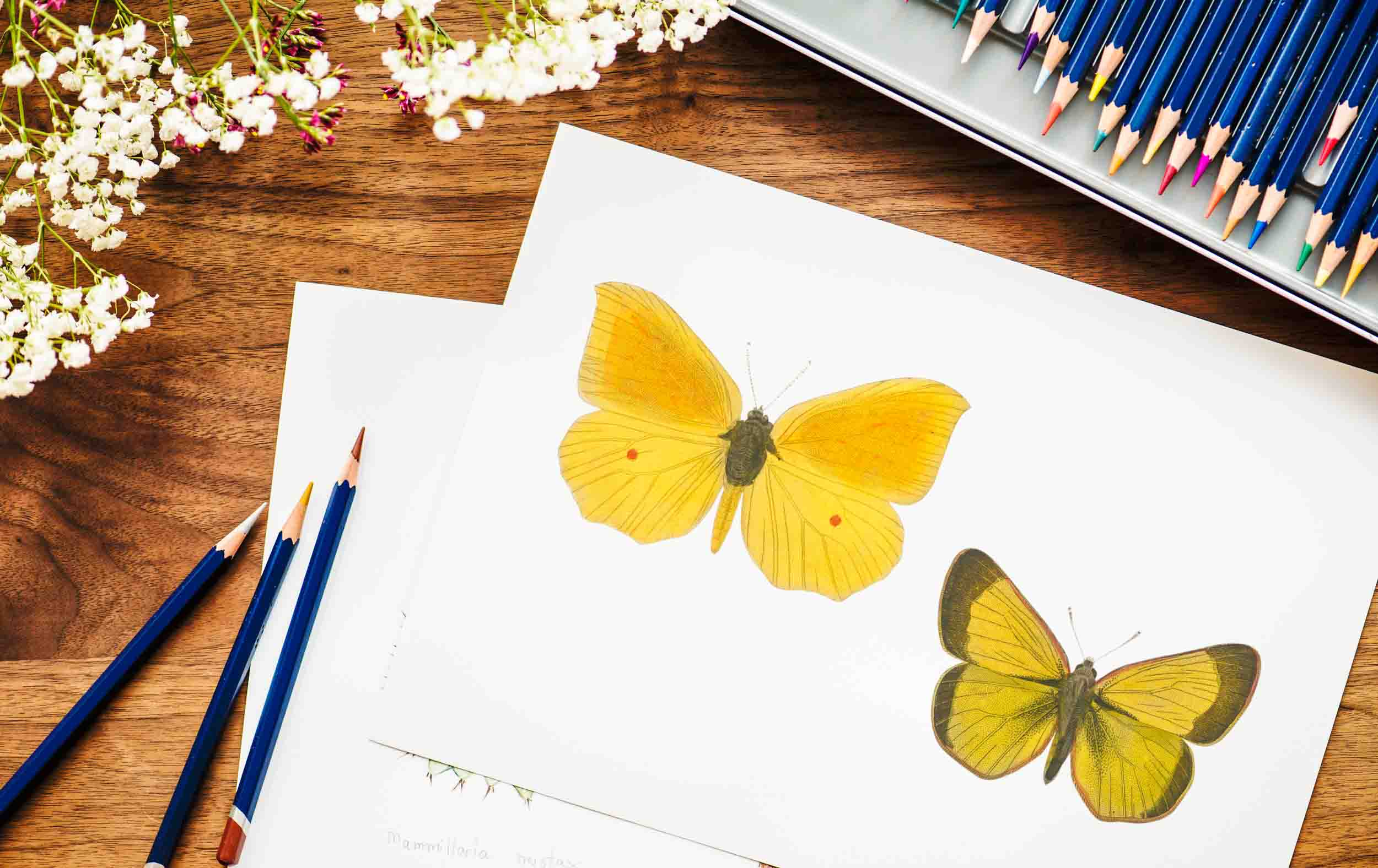 colored pencils on top of an illustration of two yellow butterflies