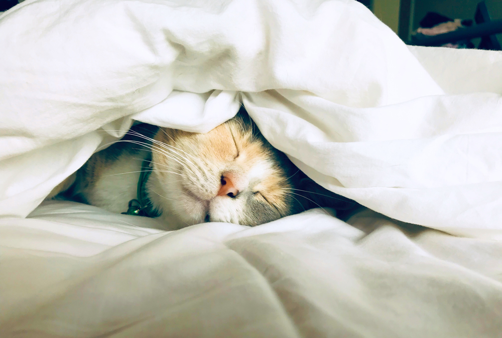 cat sleeping under white sheets