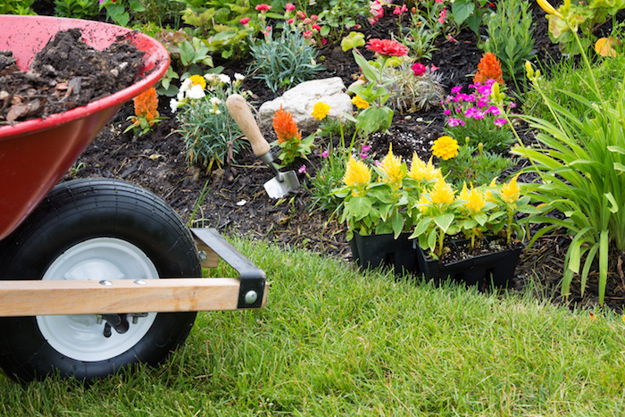 Wheelbarrow alongside a newly planted flowerbed with colorful yellow celosia seedlings in plastic packets waiting to be transplanted into the soil by the landscaper