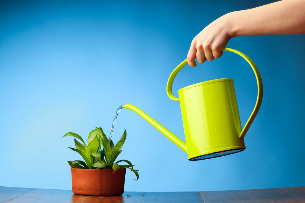 hand watering a plant with watering can