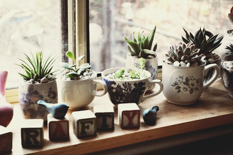 space-windowsill-indoor plants