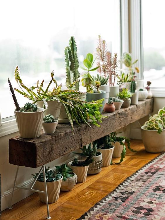 climate-control-indoor gardens potted plants