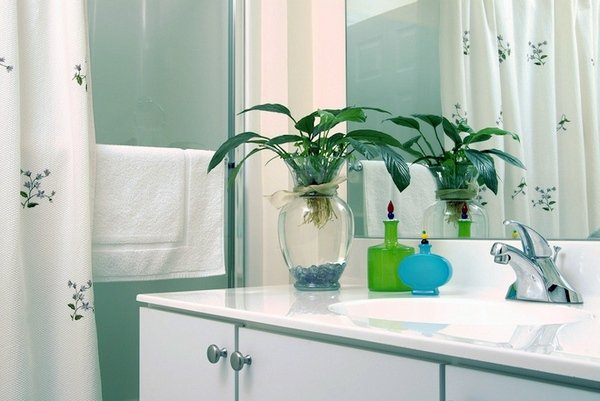green plant on sink