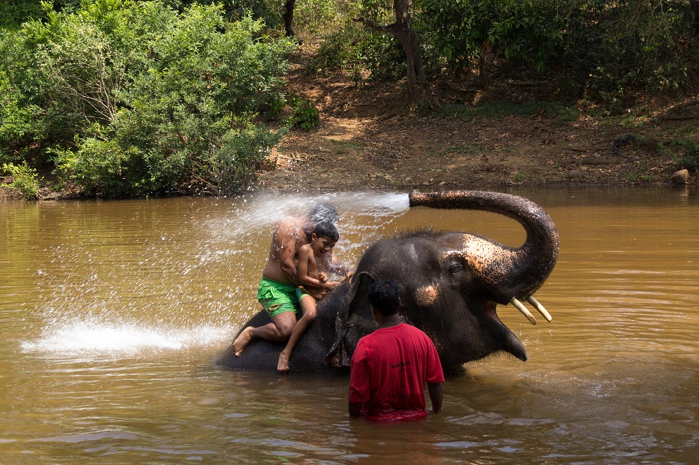 elephant bathing in goa, india