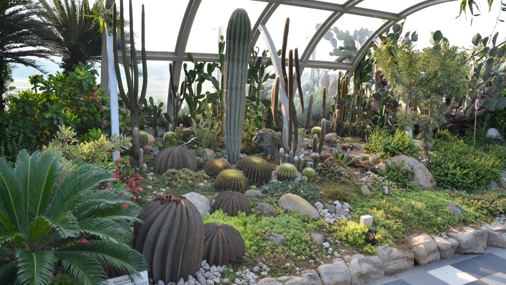 cactus garden at changi airport via must share news