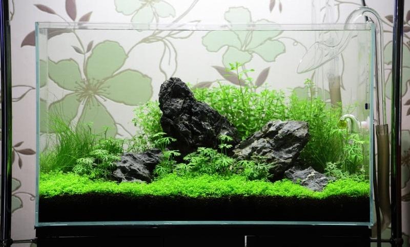 Cắt tỉa cây thủy sinh
