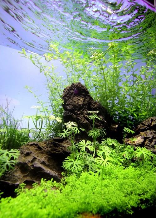 chụp ảnh bể thủy sinh từ dưới lên