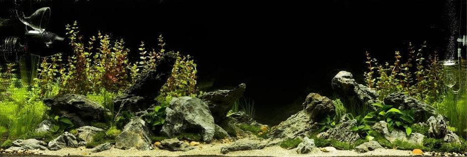 trồng cây thủy sinh trong hồ thủy sinh