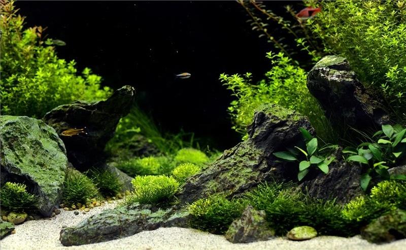 xếp đá trong hồ thủy sinh