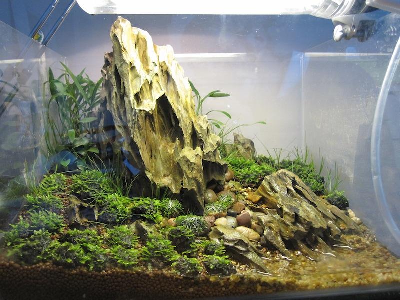 ươm cạn cây thủy sinh