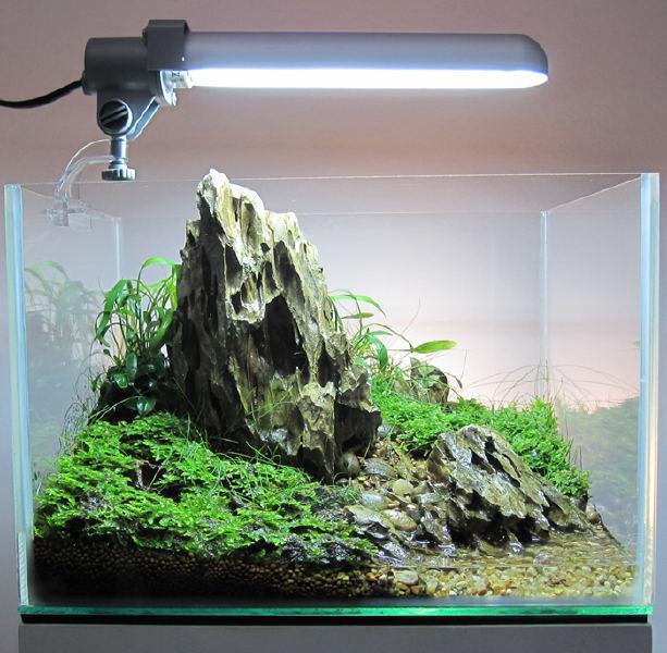 hồ thủy sinh nhỏ đá tiger, rêu