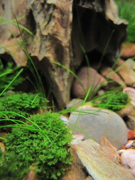rêu thủy sinh đẹp