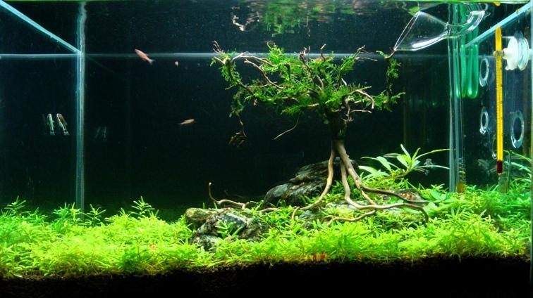 bể thủy sinh dạng thân cây
