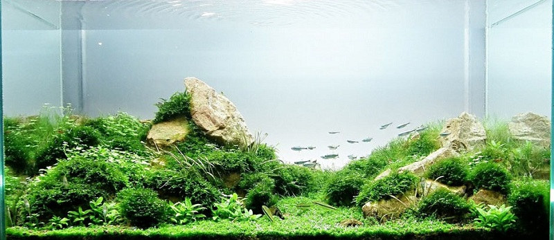 hồ thủy sinh bố cục núi