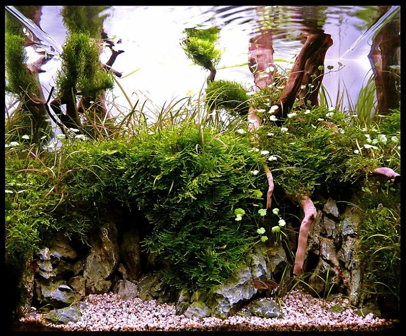 hồ nhỏ bố cục rừng hac 2011