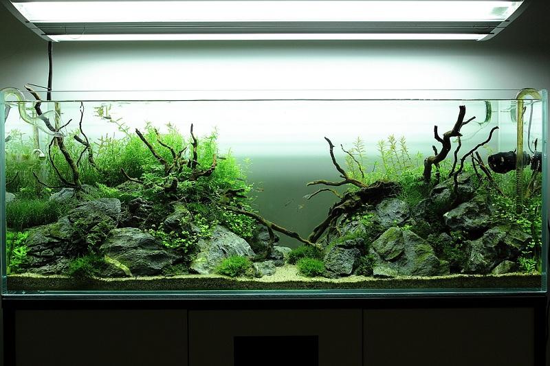 cây thủy sinh bắt đầu phát triển