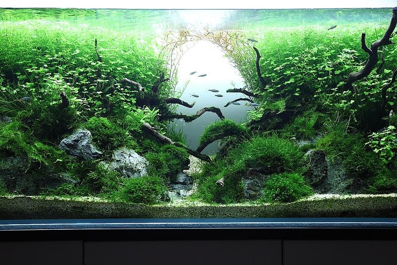 Bố cục thủy sinh phát triển rậm rạp