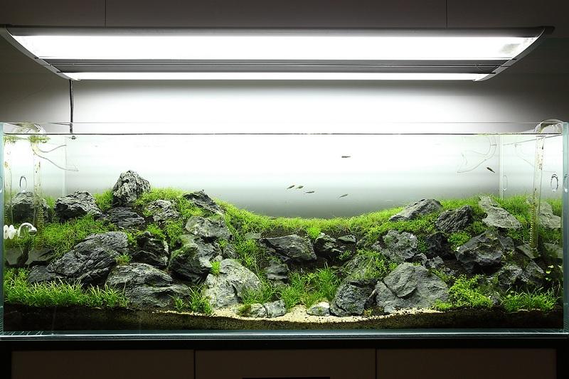 cây thủy sinh phát triển nhanh