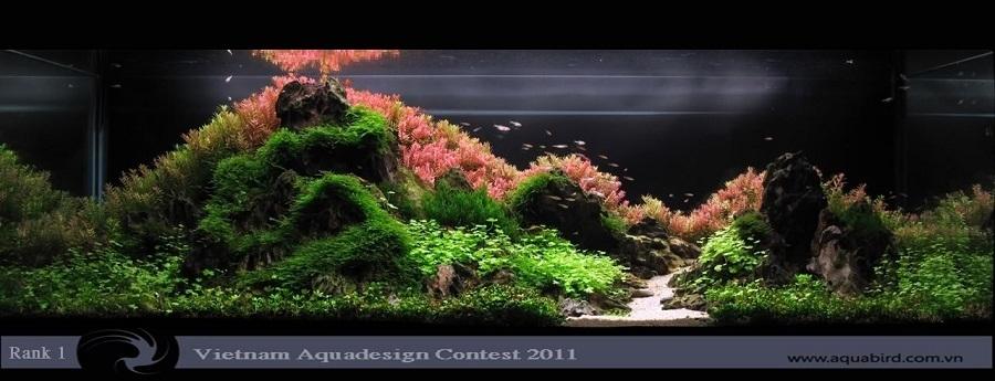 bể thủy sinh vadc 2011 hoangnam55